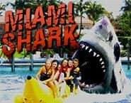 Καρχαρίας του Miami